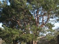 Wattle Park