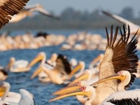The Wild Paradise of the Danube Delta Photos
