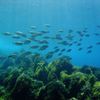 Xlendi Reef