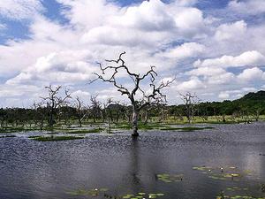 Explore Majestic Yala National Park - Sri Lanka (Camping Tour) Photos