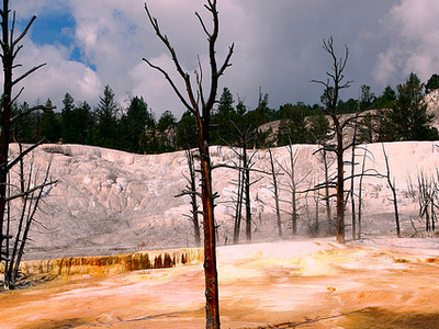 Yellowstone Plateau - Wyoming - USA