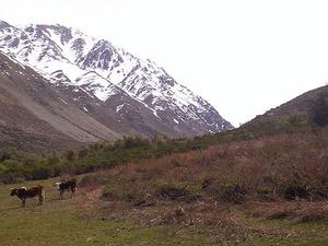 Yerba Loca Nature Sanctuary