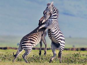 2 Days Camping Safari Manyara Or Tarangire, Ngorongoro Photos