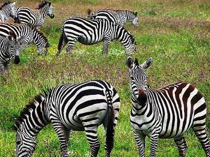 Tanzania Backpackers Camping Safaris-Northern Circuit Photos