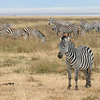 13 Days Mt. Kilimanjaro & Wildlife Safari