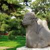 Zhaoling Qing Camel