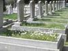 Graves At Zincirlikuyu Cemetery