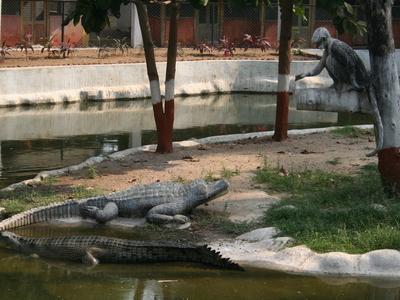 Zoo-vadodara