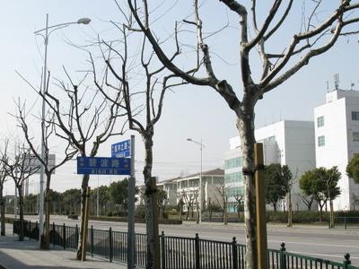 Zhangjiang Hi Tech Park