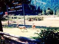 Del Loma Resort