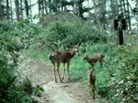 Fort Ebey State Park Campground