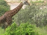 6-Days Manyara / Ngorongoro / Serengeti