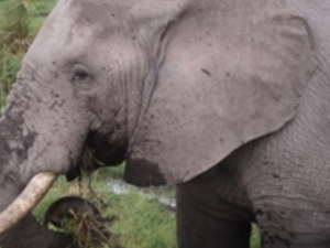 7 Days Kenya Safari Photos