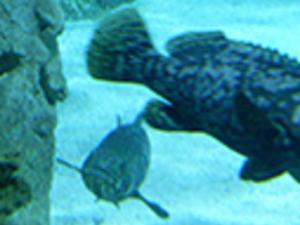 Aquarium and Shopping Mall Tour Photos