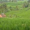 Bali's Three lakes – Highest warefall – North Bali tour