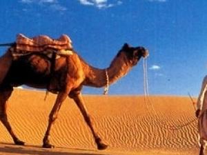 Bedouin dinner and camel ride in Sharm desert Photos