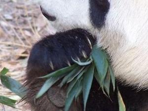 Beijing Historical Tour including the Summer Palace, Lama Temple and the Panda Garden Photos