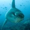 Best of Bali Dive Safari 2014 - 7Days 6 Nights 11Dives