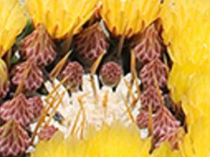 Botanicactus Photos