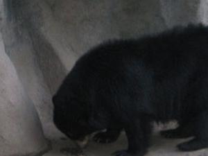 Buenos Aires Zoo Photos