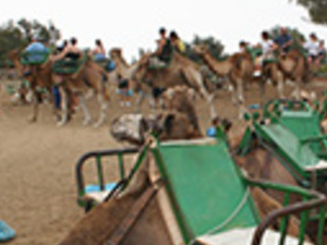 Camel Park Arteara Photos