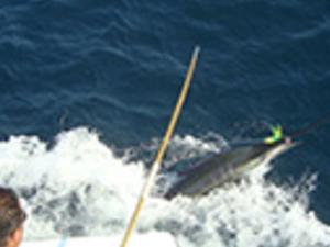 Captain Jack's Fishing Tours Photos