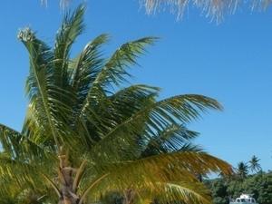 Caribbean Sea Catamaran, 2 Snorkel Locations, Natural Pool & Lunch Photos
