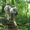 Cuc Phuong National Park - Tam Coc