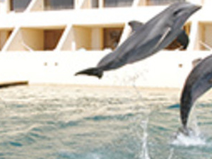 Delphinus Dreams Cancun Photos