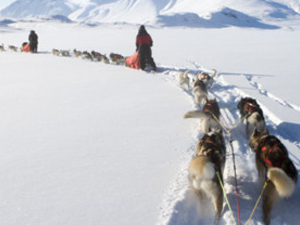 Dog sledding in northern Sweden Photos