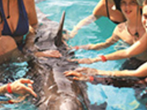 Dolphin Encounter Photos