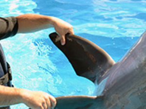 Dolphin Encounter Los Cabos Photos