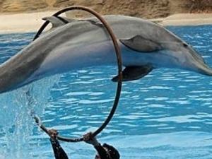 Dolphin show in Sharm El Sheikh Photos