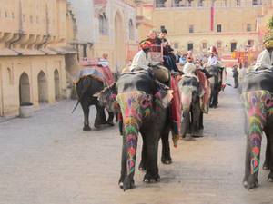 Explore Amber Fort with Morning Royal Elephant ride and View of JalMahal Photos