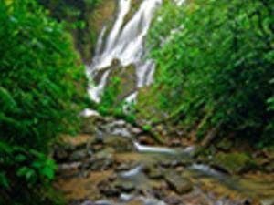 Forest Spirit Trail Photos