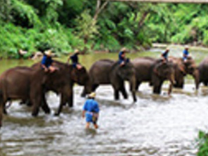 Full Day Elephant Safari And Bamboo Rafting At Chiang Dao From Hotel Inside Chiang Mai City Only Photos