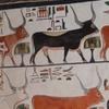 Full Day trip in west bank of luxor ( kings,queens,hatshepsut , nobles ,ramseum, habu ,deir elmadineh& memnon collosi
