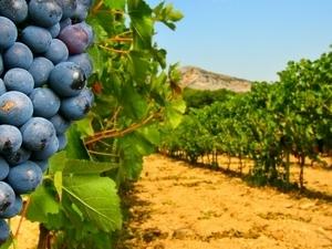 Great vineyards tour Photos