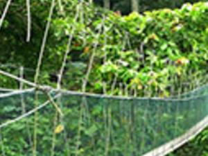 Half Day A Day In Rainforest (FRIM) - KL14 Photos