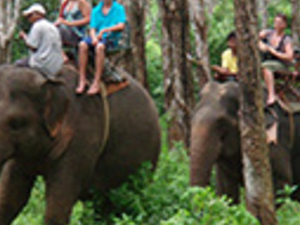Half Day Elephant Trekking And Riding Photos