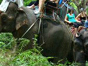 Half Day Program A-Elephant Trek 60Mins Photos