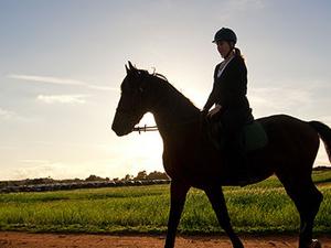 Horse riding tours Photos
