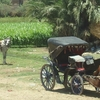 Luxor Quad bike Safari, Boat, Egyptian oriental lunch