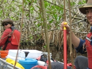 Mangrove Tunnel Kayak Eco Tour Photos