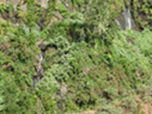 Marcos y Cordero springs hiking tour Photos