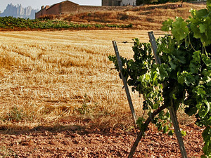 Montserrat, Tapas & Wine (morning tour) Photos