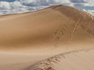 MORNING DESERT SAFARI / ABU DHABI Photos