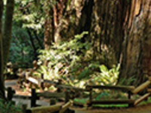 Muir Woods and Twilight City Tour Photos