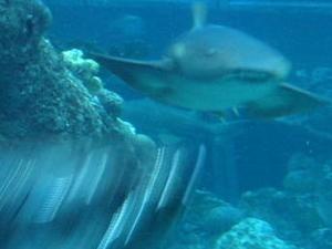New England Aquarium Photos