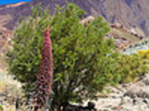 PANORAMIC TEIDE Photos